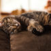 Image of sleeping cat on brown sofa
