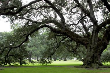 Spiritual genealogies